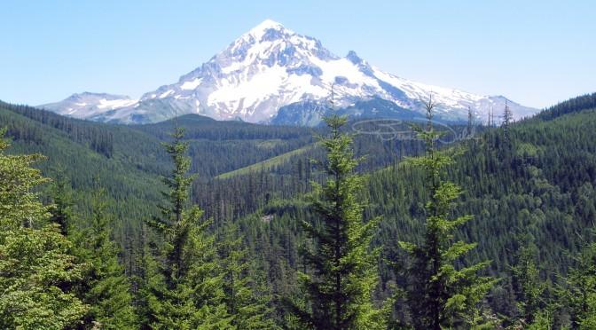 Mt Hood by Bernie Wild